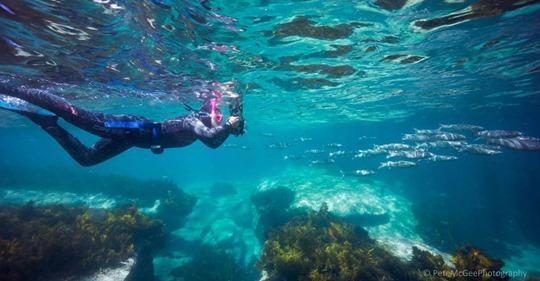 Consultation on new shellfish reef