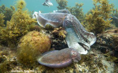 The Cuttlefish Alliance